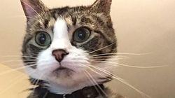 누군가가 내 고양이 사진을 나에게 문자로