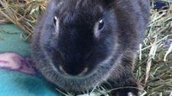 토끼 한 마리가 10대 소녀들에게 공격
