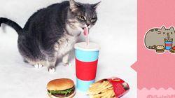 현실의 고양이로 페이스북 이모티콘을 재현하다