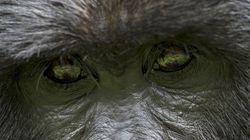 신시내티 동물원 아이 어머니를 비난하지 않고도 고릴라들을 돕는 방법