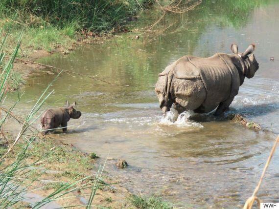 밀렵꾼과의 전쟁에서의 승리를 보여주는 아기 네팔