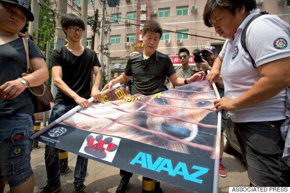 중국 '개고기축제 중단' 청원에 1천만명이