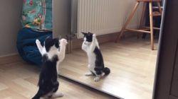 새끼 고양이는 거울이 정말 신기하다