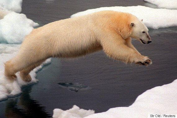 9월에는 북극바다에서 얼음이 사라질지