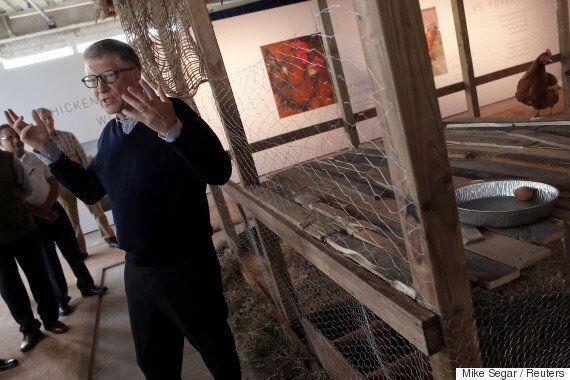 빌 게이츠, 닭 10만 마리