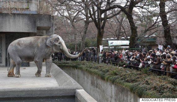 세상에서 가장 슬픈 69세 코끼리의 쓸쓸한