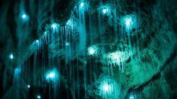 뉴질랜드의 반딧불 유충 동굴은