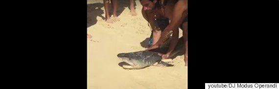 낚싯줄에 걸린 상어를 구해준 호놀룰루