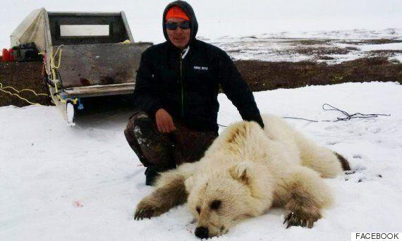 희귀한 '피즐리' 혹은 '그롤라' 곰이 캐나다 사냥꾼의 총에 맞아