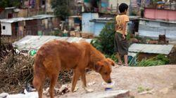베네수엘라 국민들이 식량 부족으로 개와 고양이를 사낭해 잡아먹고