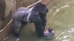 신시내티 동물원 아이의 어머니는 비난이 아닌 공감을 받아야