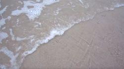 바닷물이 쓸고가자 수천 마리의 조개가