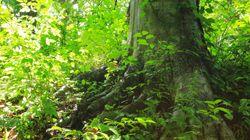 일본에서 부모가 산 속에 방치한 소년이 6일 만에