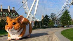 런던에 거대한 햄스터가