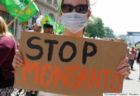 다국적 식량기업 몬산토가 연패하고