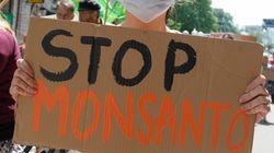 다국적 식량기업 몬산토가 추락하고