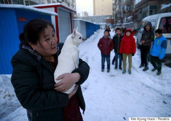 중국 반려동물 숫자는 남북한 인구보다