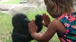 동물원의 아기 고릴라가 새로운 친구를