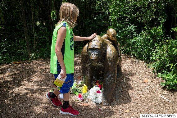 사살된 멸종위기종 고릴라에 애도 물결이 이어졌다