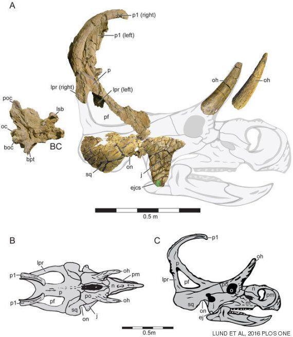 유타 주에서 새로운 뿔 달린 공룡 종이