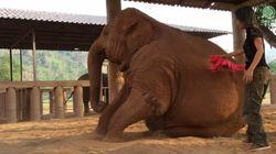 코끼리도 자장가를 불러주면 잠이