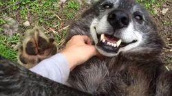 늑대개를 행복하게 만드는