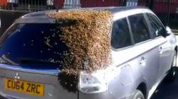 이 차는 2만 마리의 벌떼를 달고 도로를