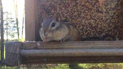 새의 먹이를 훔치다 걸린 다람쥐의 놀라운
