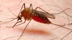 피부 균을 조작해 모기를 방지할 수