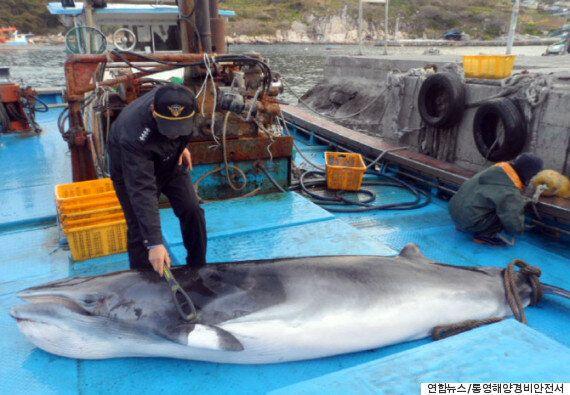 우리가 먹는 밍크고래의 70%는 불법포획된