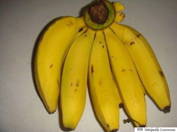 멸종 위기에 빠진 바나나를 반드시 구해야 하는