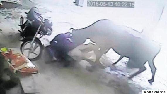 소녀를 죽이려던 남자들을 공격한 소의