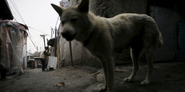 A man (L) works outside his shack as a stray dog wanders an alley at Guryong village in Seoul, South...