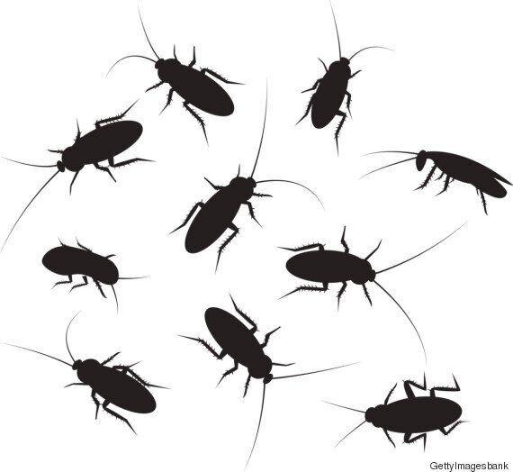 바퀴벌레는 머리가 잘려도 살 수