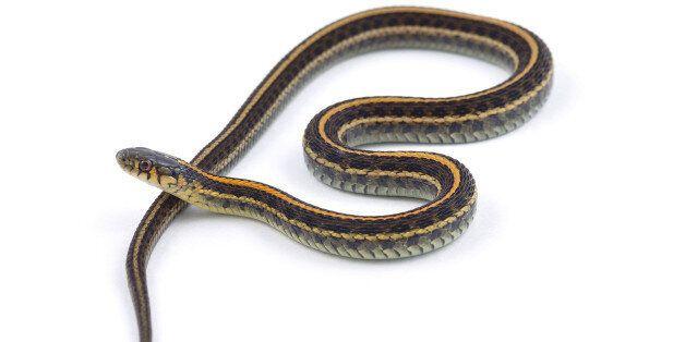 서울에서 뱀에 물리면 이 순서로 대처하면
