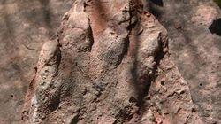 하이킹 중 2억 3천만 년 전 발자국을