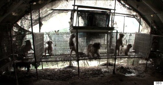 TV 동물농장이 보여준 '강아지 공장'의 운영방식