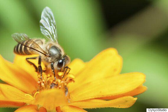 벌에 대한 최근 연구결과는 정말
