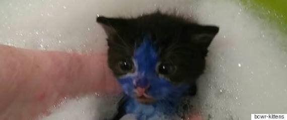 스머프와 슈렉이란 별명을 얻은 새끼 고양이들이 구조되어 새 삶을