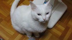 주인의 발을 점잖게 거부하는 고양이의 무한 반복