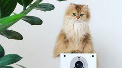 세계에서 가장 아름다운 고양이가