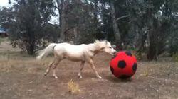 축구를 즐기는 말의 모습은 쓸데없이