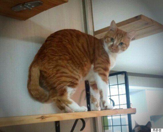 추운 겨울 차가운 벽 사이에서 구조된 길고양이 '노노'의