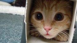 집사들만 이해하는 고양이의 모습 31