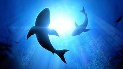 상어가 보는 세상을 볼 수 있는 카메라가