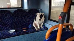 버스에 버려진 개는 버스에서 먹고