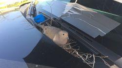 경찰차에 둥지를 튼 비둘기를 위한 경찰들의
