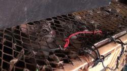 법원이 길고양이 600여 마리 잔인하게 죽인 남자에게 '집행유예' 선고한 이유(사진