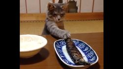 이 고양이는 생선이 너무 먹고