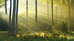 마포 노을공원에 만들어지는 '가습기 살균제 피해자 추모의 숲'(사진